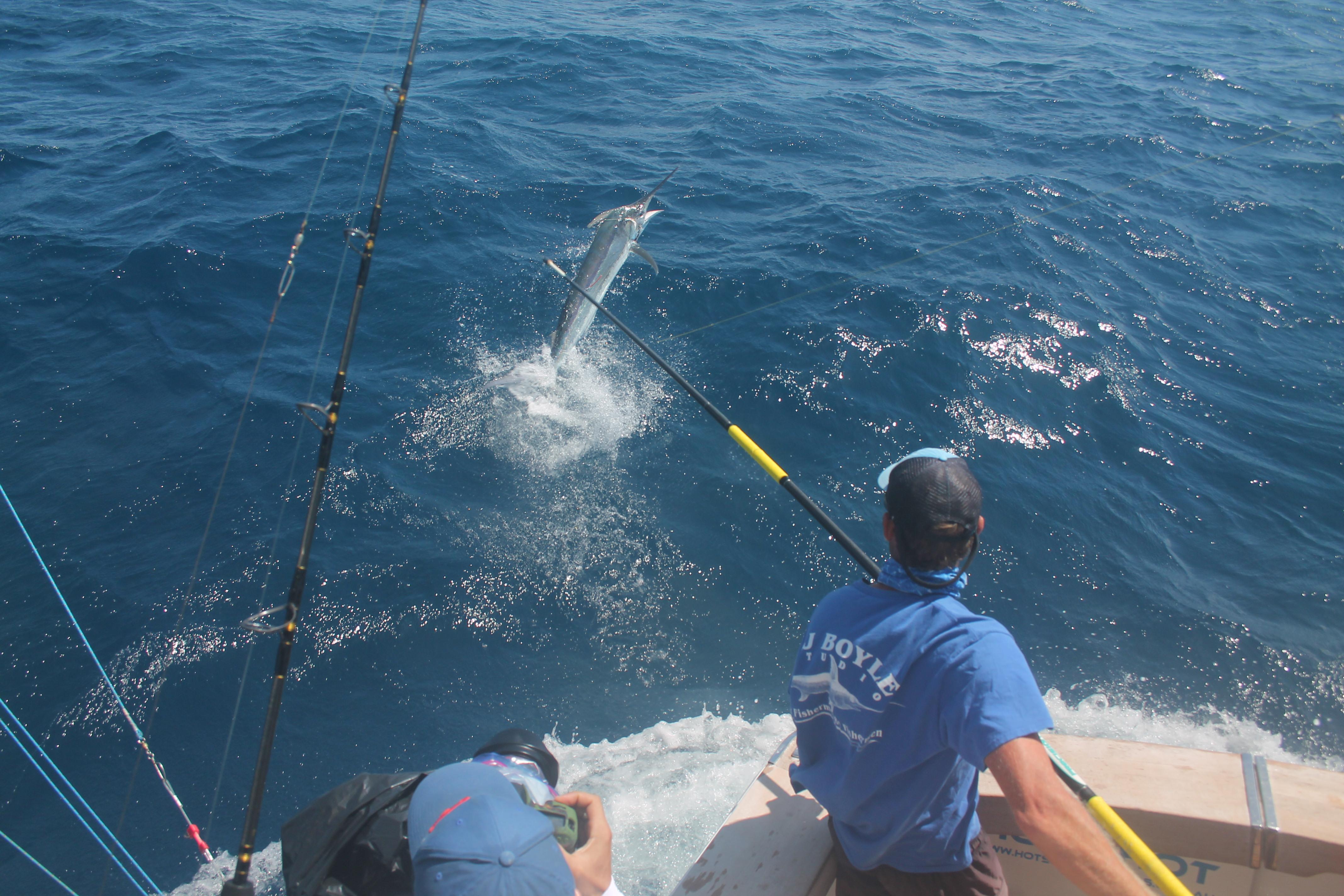 Hotshot marlin fishing charters february fishing report for Marlin fishing charters