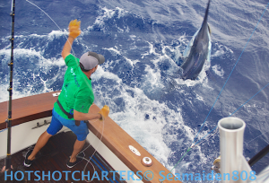 700 Black Marlin