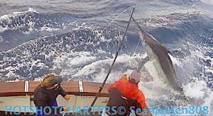 Hotshot Charters black marlin