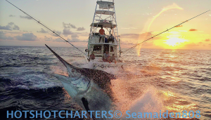 Black marlin at sunset on drone