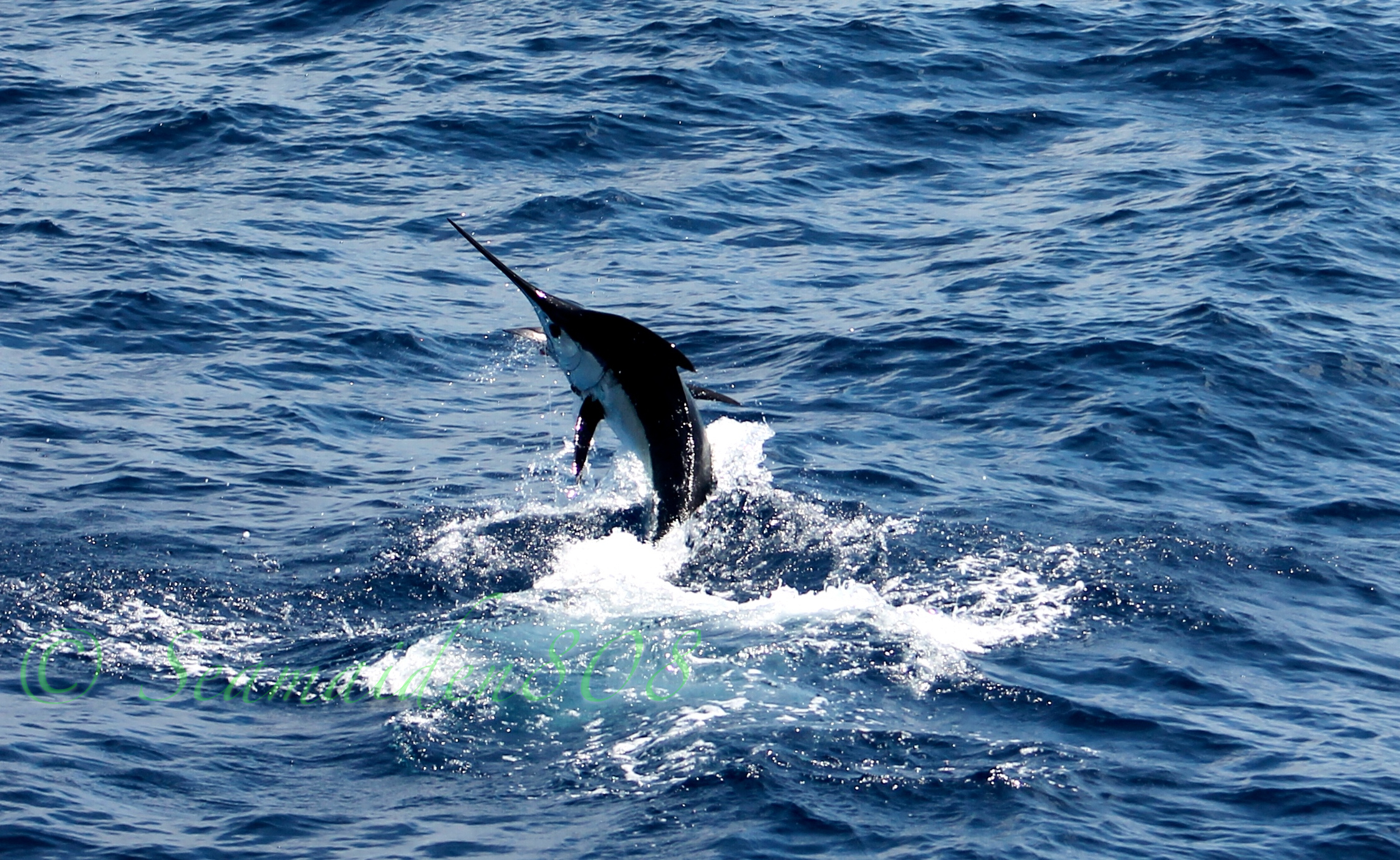 fishing stripe marlin