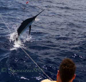 fishing for blue marlin