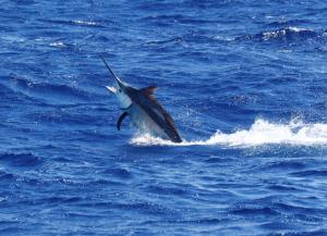 Fishing onboard Hotshot Charters