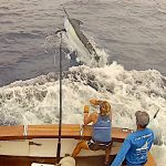 Giant Black Marlin