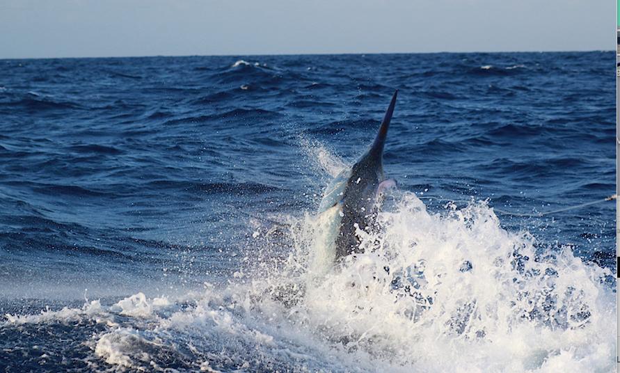 Fishing on Hotshot Charters